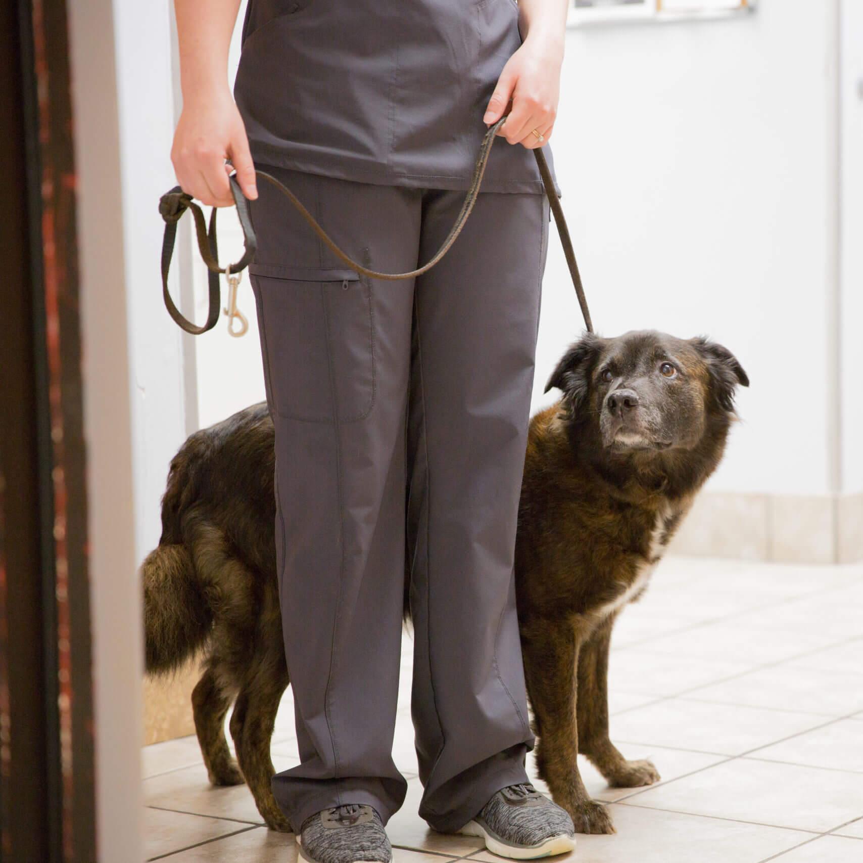 Staff walking dog on leash